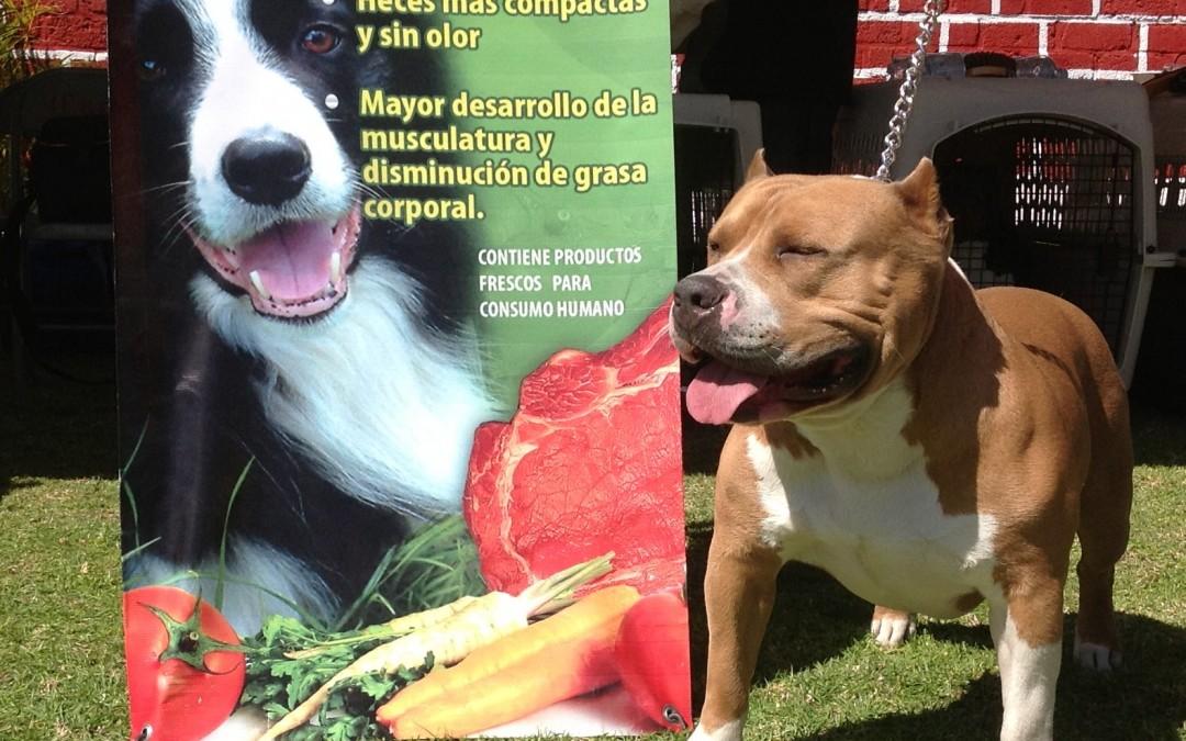 Competencia IBKC  Guadalajara  (Competencia internacional de Bully)