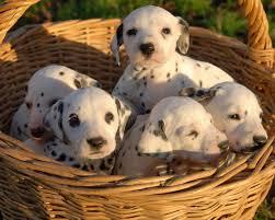 Cachorros en crecimiento