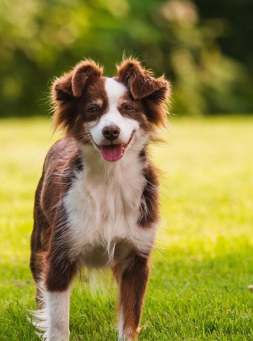 ¿Tu perro manifiesta alguno de estos signos?