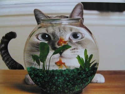 https://petfoodacba.com/wp-content/uploads/2014/06/catcat.jpg