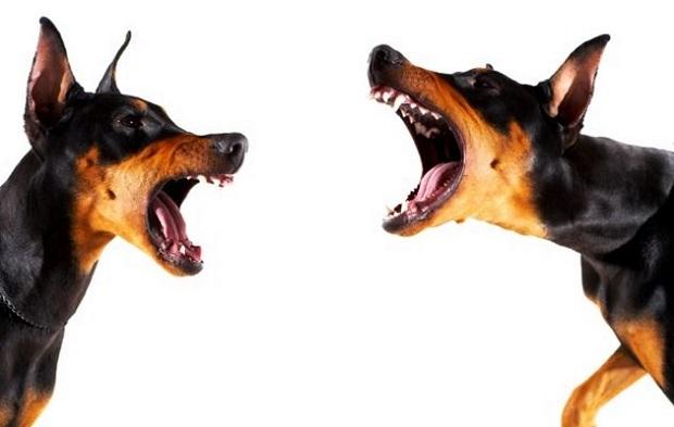 Agresividad en los perros.