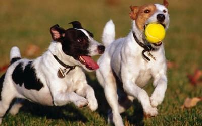 Capsula 3. Desnutrición en el perro
